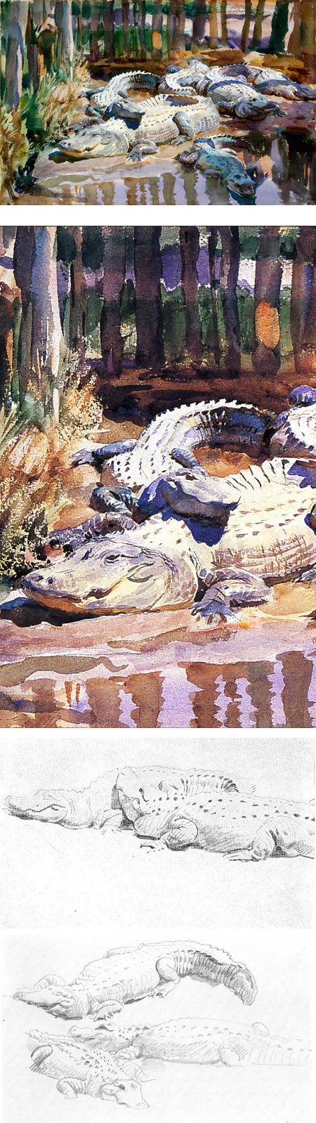 Sargent's Alligators