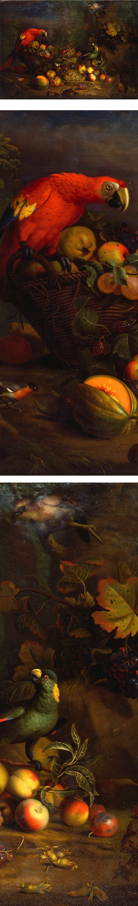 Parrots and Fruit with Other Birds and a Squirrel, Tobias Stranover