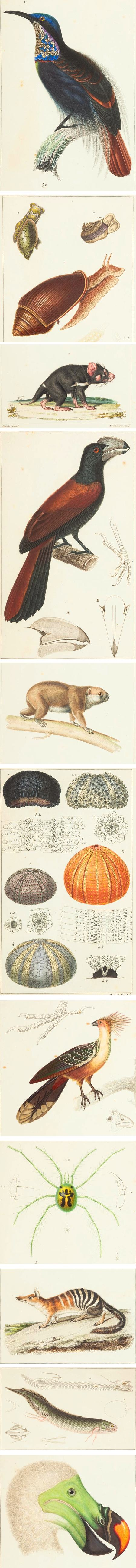 Atlas de Zoologie: ou collection de 100 planches (Zoological atlas or collection of 100 plates)