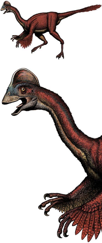 New feathered dinosaur, Anzu wyliei, paleo art by Robert F. Walters