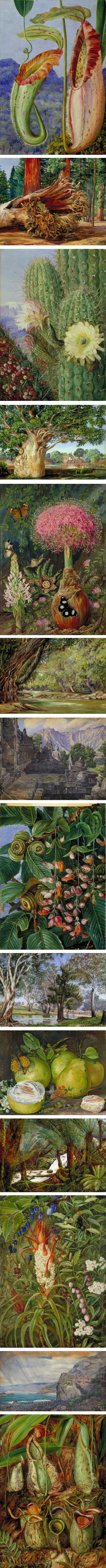 Marianne North, Victorian botanical art and landscapes