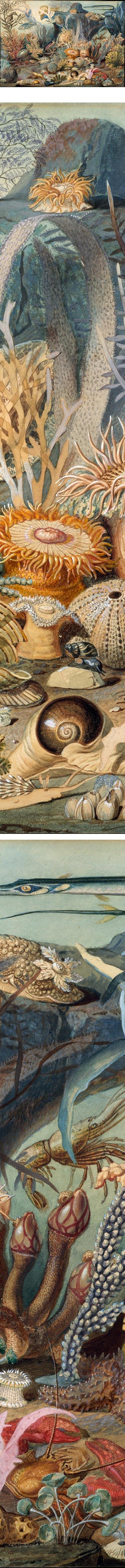 Ocean Life, Christian Schussele, watercolor and gouache
