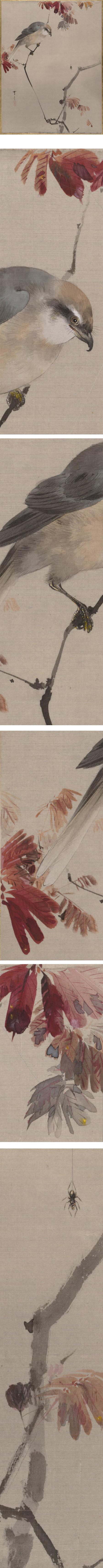 Bird on Branch Watching Spider, Watanabe Seitei, ink and color on silk