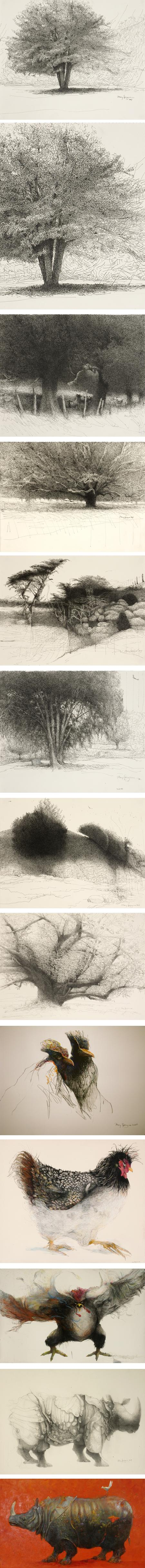 Mary Sprague, ink drawings, and watercolor of trees, chickens, rhinos