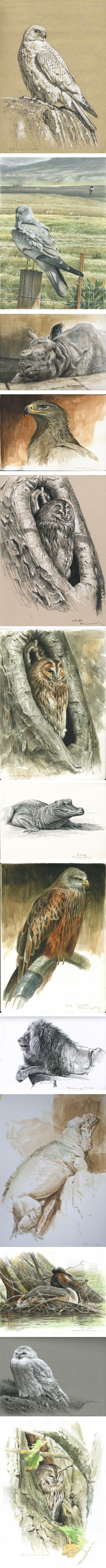 Paschalis Dougalis, wildlife art, watercolors pen and ink
