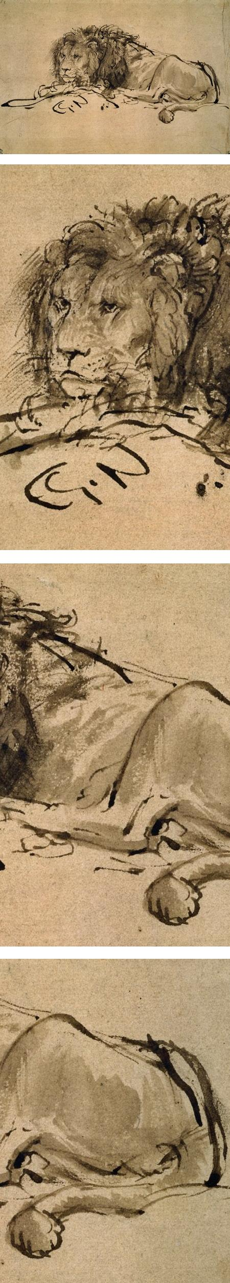 Lion Resting, Turned to the Left; Rembrandt van Rijn; ink and wash drawing