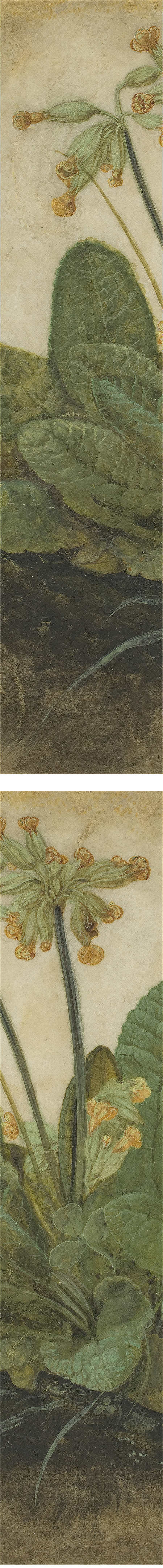 Tuft of Cowslips, Albrecht Durer, gouache on vellum (details)