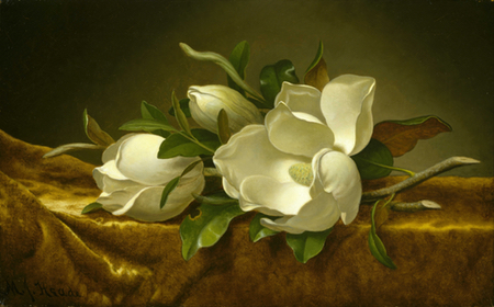 Magnolias on Gold Velvet Cloth, Martin Johnson Heade