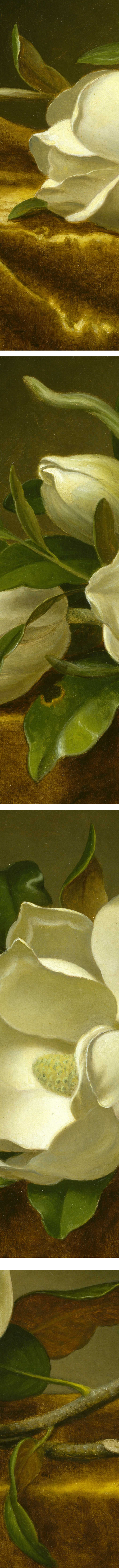 Magnolias on Gold Velvet Cloth, Martin Johnson Heade (details)