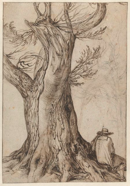 Chestnut Tree with some trees around it, Jacob de Gheyn, ink and chalk drawing
