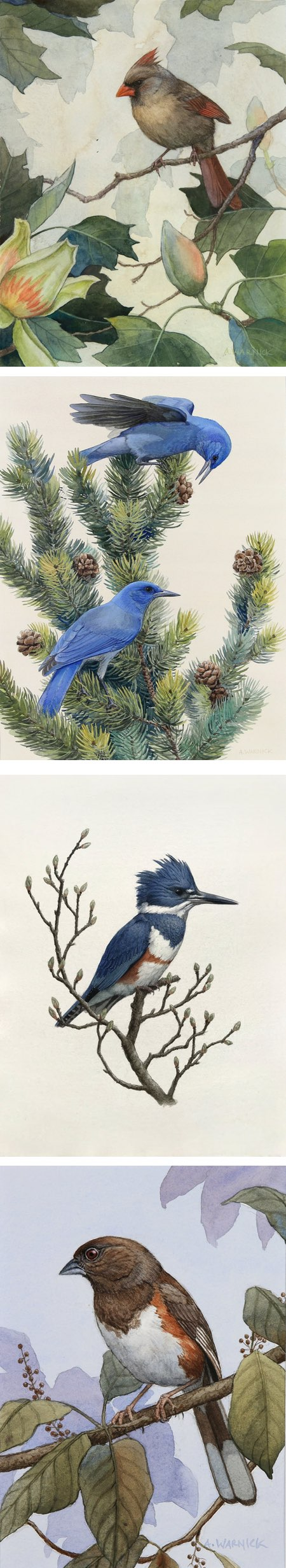 Alex Warnick, watercolor paintings of birds